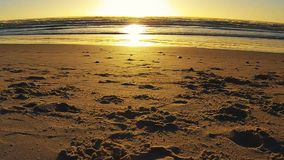 Dog running at sunset, Noordhoek Beach, South Africa stock footage