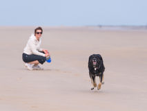 Dog running on teh beach Royalty Free Stock Photography