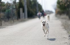 Dog running towards the camera with children behind unfocused. royalty free stock images