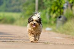The dog running or walking on road Royalty Free Stock Photography