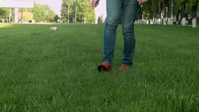Dog runs on the green grass stock footage
