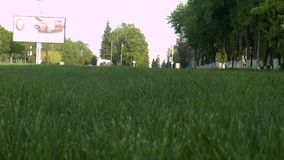 Dog runs on the green grass stock video footage