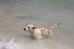 Dog runs happily Stock Photo