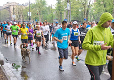 Dog runs a marathon race Stock Photos