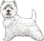 Dog runs. Vector drawing of a cute lap dog Royalty Free Stock Images