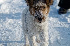 Dog in the snow. Stock Image