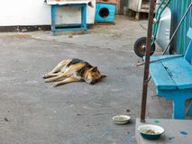 Dog in a yard near a bowl of food. Dog in a rural yard near a bowl of food royalty free stock photo