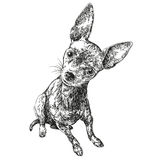 Dog russian toy terrier hand drawn vector llustration sketch. Dog russian toy terrier hand drawn vector llustration realistic sketch Royalty Free Stock Images