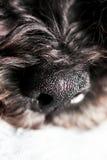 Dog& x27; s鼻子关闭 免版税库存图片