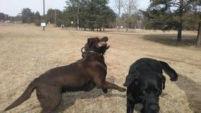 Dog& x27; s royaltyfri foto