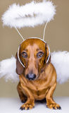 Dog's angel Stock Image