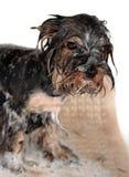 Dog's bathing royalty free stock images