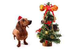 Dog's Christmas tree with bone on the top Royalty Free Stock Photography