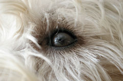Dog's eye Royalty Free Stock Photo