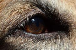 Dog`s Eye. Extreme closeup on a dog`s eye Royalty Free Stock Image