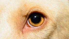 Dog's eye Royalty Free Stock Images