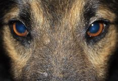 Dog's eyes. The dog with sad eyes Royalty Free Stock Image
