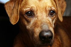 Dog's face. Close up stock photo