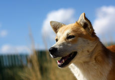 Dog's face outdoors Royalty Free Stock Image