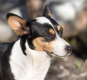 Dog`s face with spots Stock Photography