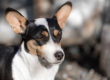 Dog`s face with spots Stock Image