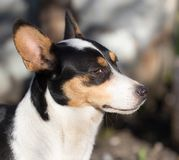 Dog`s face with spots Stock Photos