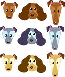 Dog`s faces 01 royalty free stock photography