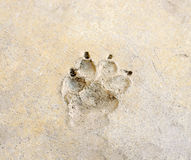 Dog 's footprint Stock Images