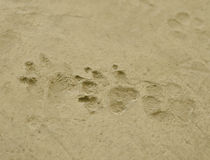 The dog 's footprints Royalty Free Stock Image