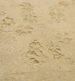 Dog 's footprints Stock Photos