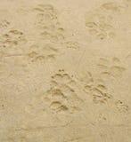Dog 's footprints Stock Photos