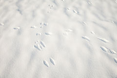 Dog's footprints in the snow Stock Photography