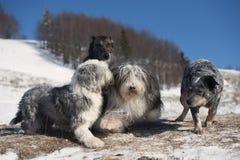 Dog`s friendship stock photography