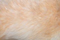 Dog's fur texture Stock Photo