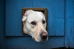 Dog`s head in cat flap Royalty Free Stock Photography