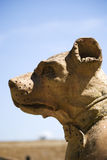 The dog`s head, detail of sculpture in Boboli gardens Stock Photography