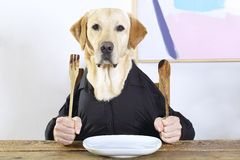 Human dog Royalty Free Stock Photography