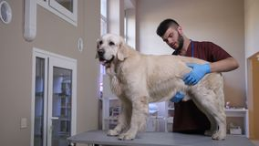 Dog`s internal organs health check by veterinarian stock video footage