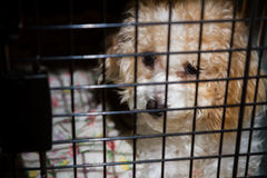 Dog in it's kennel Stock Images