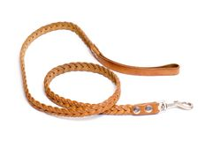 Dog's leash Stock Photo