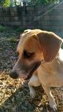 Dog& x27; s-Leben lizenzfreie stockbilder
