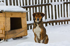 Dog's life Stock Photo
