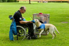A Dog's Life. Montelupo Fiorentino, Italy - June 12, 2016: A Dog's Life, event dedicated to the valorization and the dog utilities. Demonstrations held in stock photos