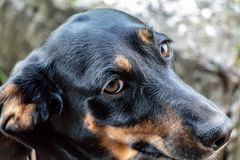 A dog`s look at the host with a question royalty free stock photo