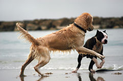 Dog's love royalty free stock photography