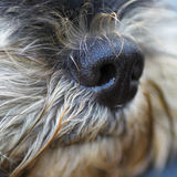 A dog's nose Stock Image