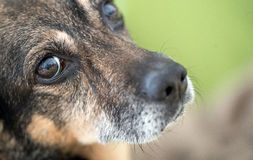 Dog`s nose and eye. Macro shot of Dog`s nose and eye, cute animal, pet Royalty Free Stock Photo