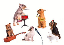 Dog's orchestra/ band Stock Image