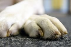 Dog`s paw close up royalty free stock photography