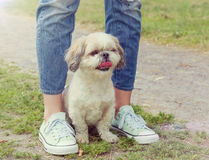 Dog's paw feet next to the owner -- walking together royalty free stock photo